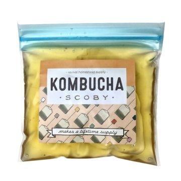 Kombucha SCOBY - Case of 6