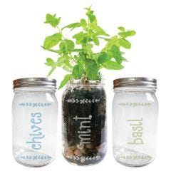 Mason Jar Herb Garden Engraved Jar, Pack of 3